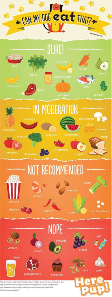 DogFood_Infographic-3