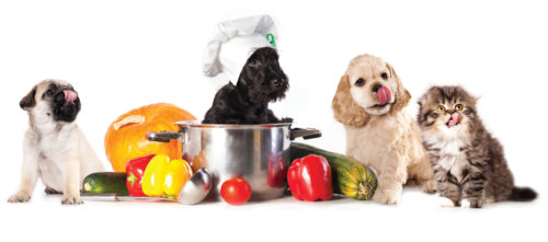 PROCESSED FOOD VS. WHOLE FOOD: WHAT'S BETTER FOR YOUR PET?